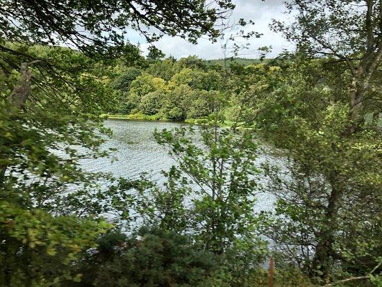 Abriachan Forest Foto