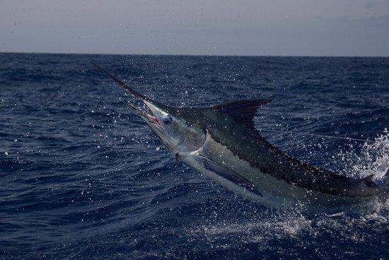 Marlin Cape Verde