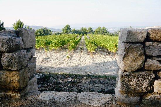 Chris Curtis Photography: The landscape of Provence, rolling hillsides, vineyards - Château La Coste