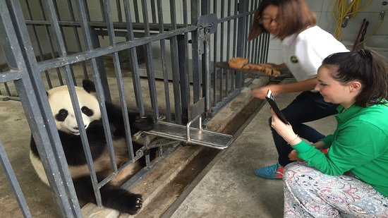 Panda Valley: Panda Volunteering.