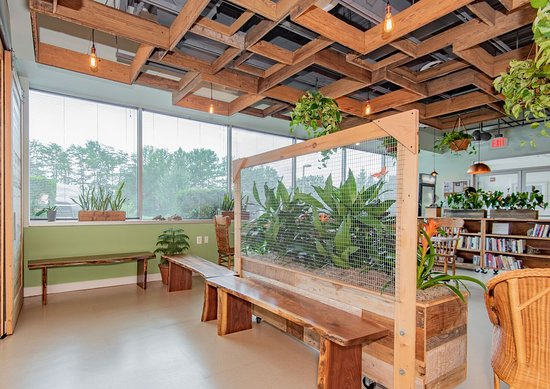 Rise Well-Being Center: Garden area with benches.