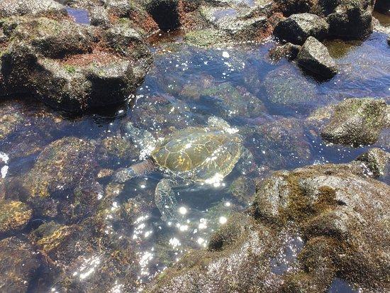 Hawaii, Big Island Tartaruga