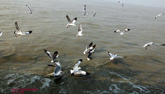 Sagar Island照片