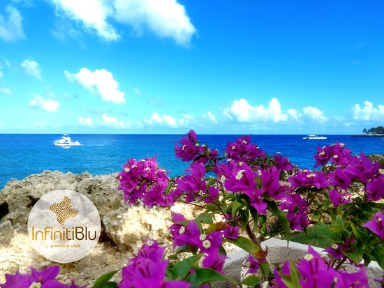 Infiniti Blu Luxury Ocean Front Condos: The Bougainville among nature's creation. Nature at its ' best.