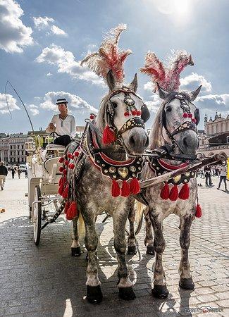Visita di Cracovia in carozza