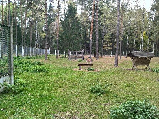 Беларусь: Экскурсионные вольеры лесной зоопарк