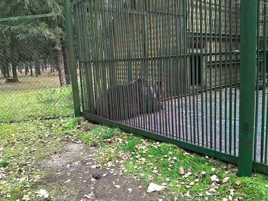 Беларусь: Экскурсионные вольеры лесной зоопарк, медведь отдыхает