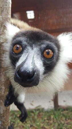 Andasibe Mantadia National Park Reserve Of Perinet 2019 All You