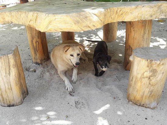 At Hotel Maya Luna we are very pet-friendly! Come and enjoy our beach with your best friend. Dont leave them at home! Travel with your dog. Our beach is also a paradise for pets..