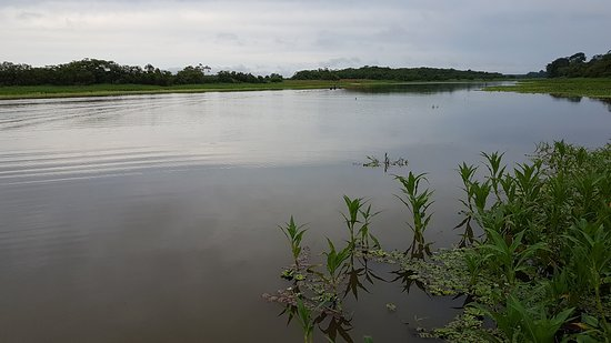 Amazon River: The mighty amazon