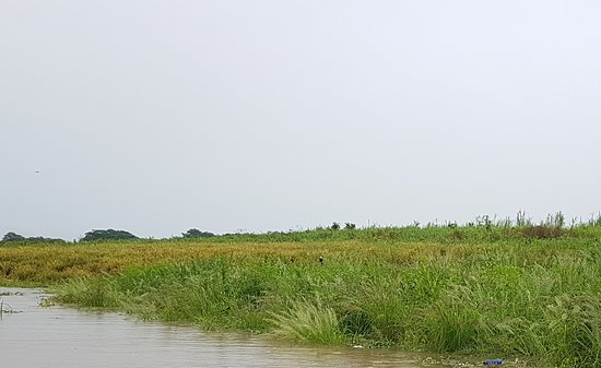 Amazon River: Birds and vegetation as far as you can see