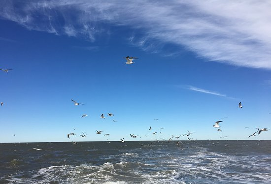 Birds in the wake of Hatteras to Okracoke ferry