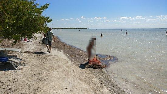 Wir reinigen unseren Strand selbst. Dahinter: Wattwanderungen