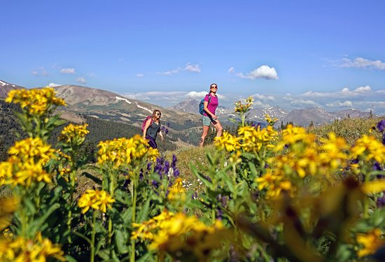 Breckenridge, CO: Wildflowers Hike