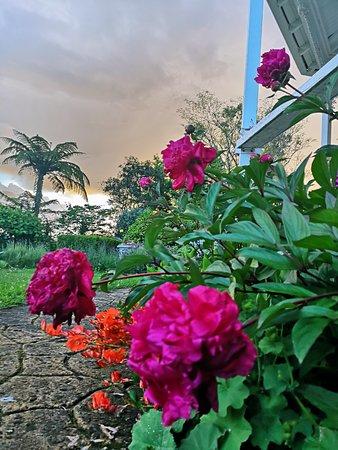 Фотография Country Villa Estate