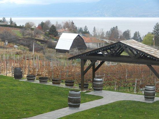 Tidy vineyard below restaurant near Lake
