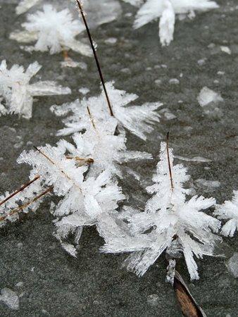Mazama, WA: Ice crystals on the frozen lake.