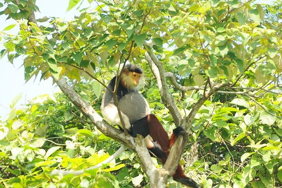 Half-Day Son Tra Wildlife Spotting...