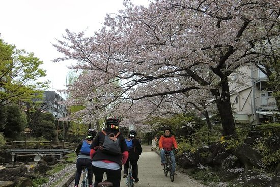 Tokyo by Bike: Skytree, Kiyosumi...