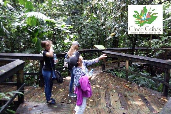 Cinco Ceibas Rainforest Reserve Bird ...