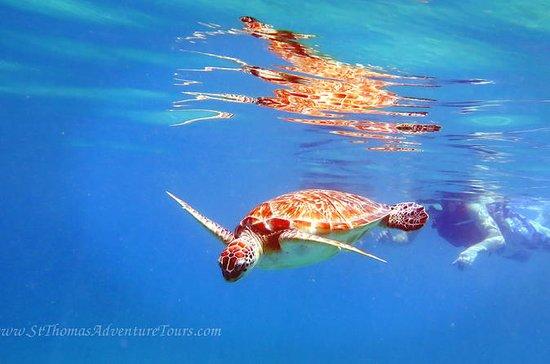 Sea Turtle Snorkel and Nature Walk...