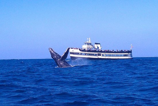 Whale Watching Cruise guidad av ...
