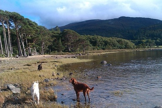Guidet Killarney National Park...
