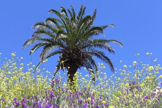 La Gomera Herbal Hike