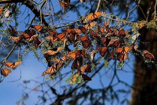 Monarch Butterfly Sanctuary Day Trip ...