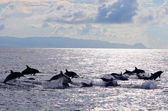 Pamilacan Island Hvaler og delfiner...