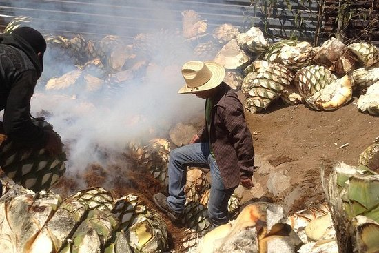 Private Tour: Mezcal Day Tour in...