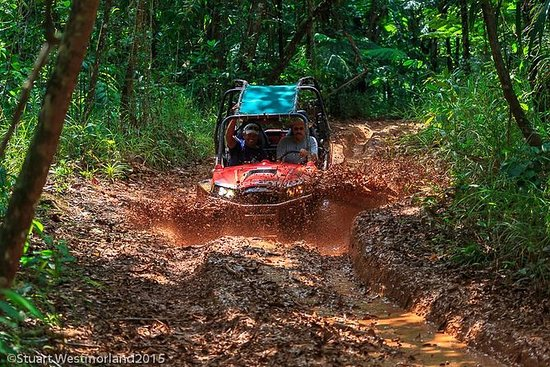 Off-Road Small-Group Jungle Driving...