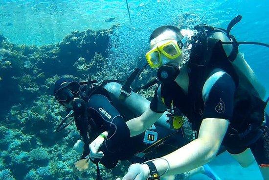 Mergulho e mergulho com snorkel de...