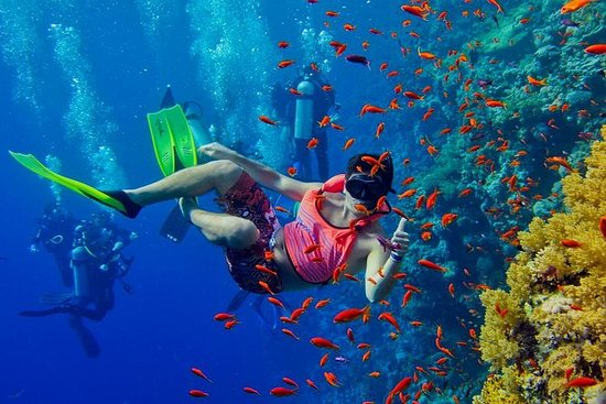 半日Zanzibar Mnemba環礁海洋保護区シュノーケリングツアー