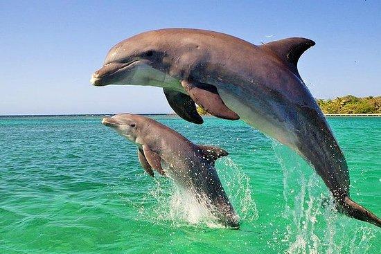 Observation des dauphins et excursion...