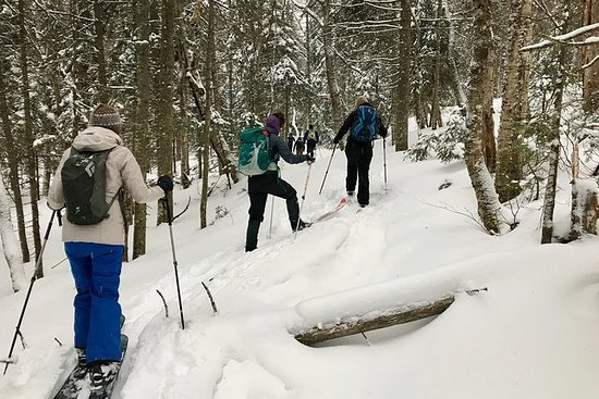 Nordic Backcountry Skiing Tour in...