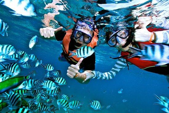 Hon Mun Island Half-Day Snorkeling...