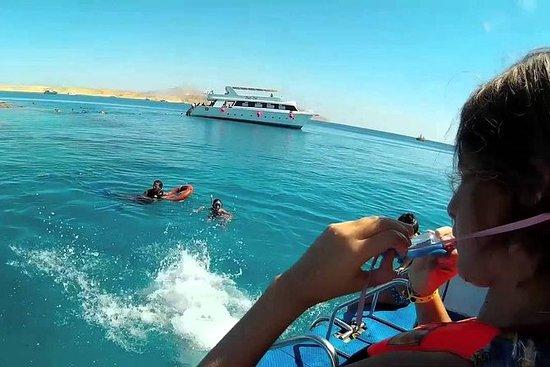 Snorkling tur i Tiran Island med båt