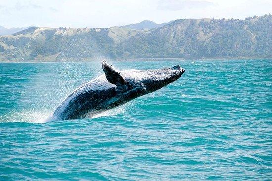 Observação de baleias e aventura de...