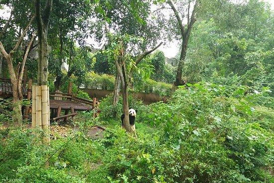 オールインクルーシブ成都ハイライトパンダ旅行とカスタマイズ可能なサイト