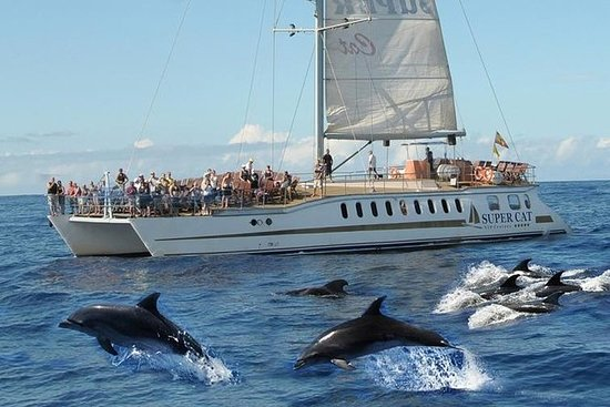 Dolphin watching catamaran cruise and...