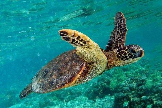 Marmaris Dalyan Turtle Beach Mud Bath...