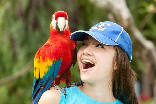 Descubre Bali Bird Park