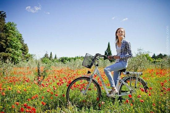 来自StRémy-de-Provence的电动自行车普罗旺斯和Carrier...