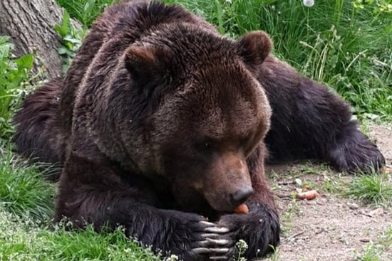 Day tour from Brasov to the Bears...