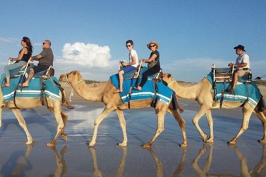 Paseo en camello de 2 horas