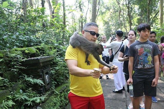 Excursión de un día a Ubud con...