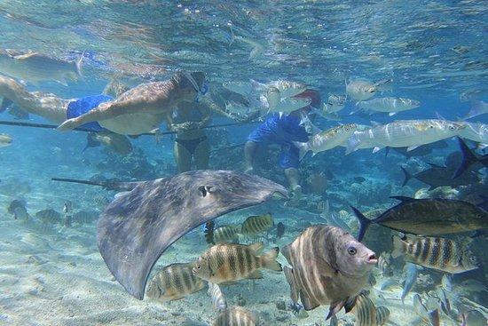 Moorea Lagoonarium Snorkeltour