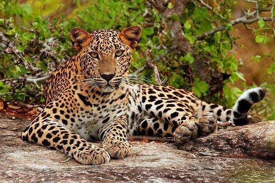 Safari privado de medio día en el...