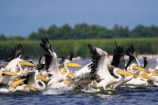 Observation des oiseaux dans le delta...